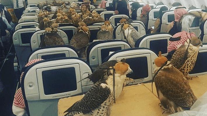リッチ過ぎるサウジアラビアの王子が飛行機でハヤブサ80羽分の座席を購入