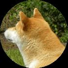 犬系男子の特徴と性格を把握して上手に付き合うコツ